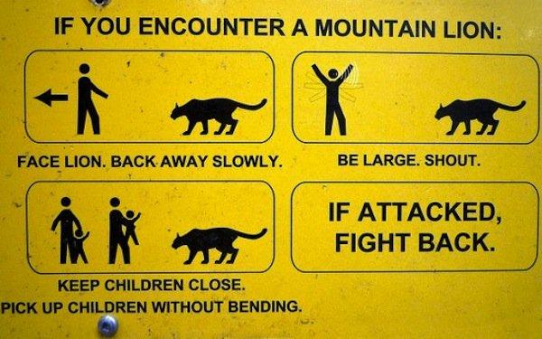 if you encounter a mountain lion